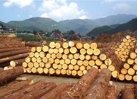 木材市場に運ばれた木材